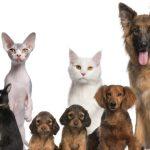 Animales para cada signo del zodiaco